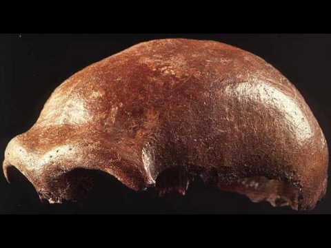 Westbam neandertal man