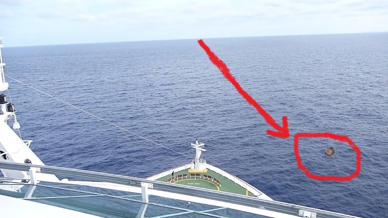 mermaid caught on tape by cruise ship youtube