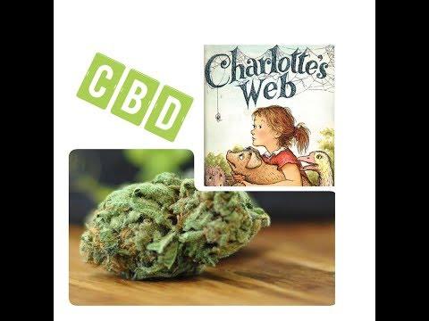 charlottes-web-cannabis-strain-review