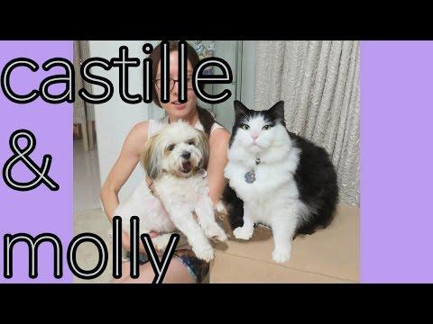 Ragdoll Kitty Castille & Shih Tzu Molly -- Gold Coast, Australia