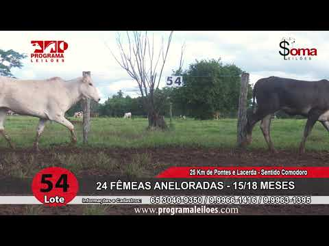 LOTE 54R
