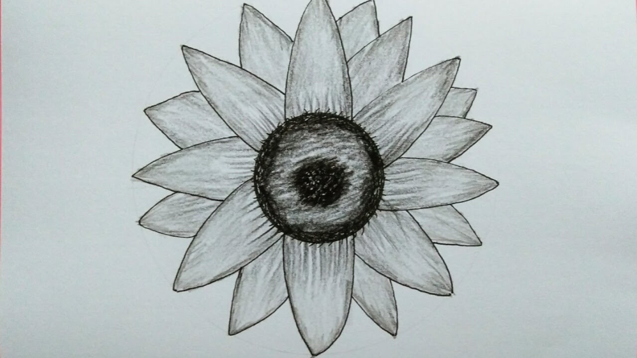 Cara Menggambar Bunga Matahari Sunflower Drawing Youtube
