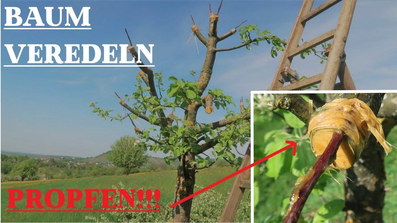 Berühmt Eine GANZ NEUE SACHE / Obstbaum VEREDELN | Baumschnitt #5 - YouTube #FQ_24