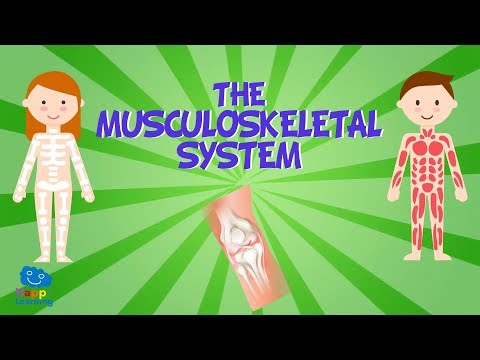 The Musculoskeletal System | Educational Videos For Kids