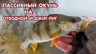 ловля пассивного окуня зимой на джиг риг и отводной попытка закрыть рыболовный сезон n2
