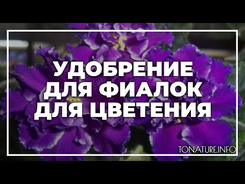 Удобрение для фиалок для цветения | toNature.Info