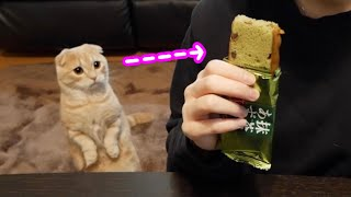 3時のおやつを食べていると全力で訴えてくる猫がこちら