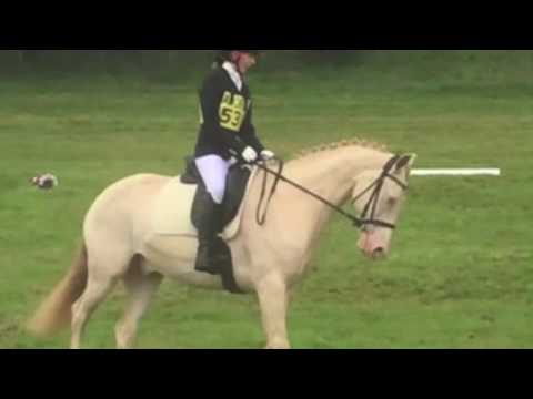 BE96 dressage test 20.8 with marks and comments
