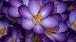Купить цветы розы тюльпаны маргаритки цветочный магазин Свадебные Херсон цены недорого(Купить цветы Херсон цены недорого розы Херсон цены недорого тюльпаны Херсон цены недорого маргаритки Херс..., 2014-11-20T16:12:14.000Z)