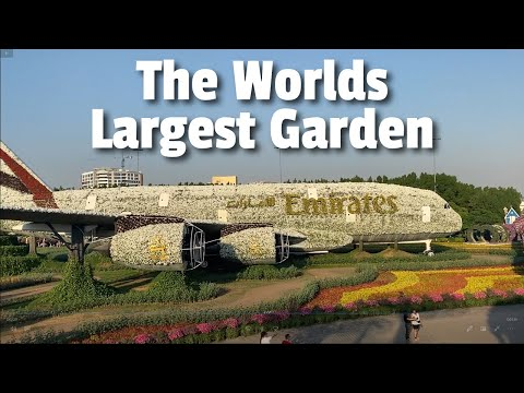 Dubai Miracle Garden 2020, The miracle of the desert and the worlds largest garden!