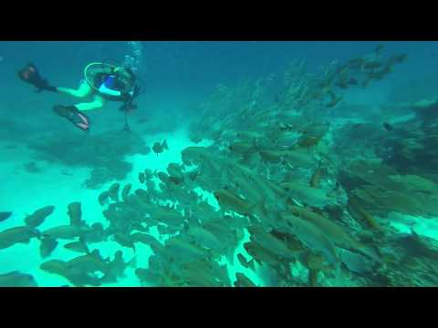 Beautiful Reef and Various Schools of Fish in Palau