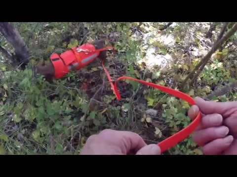 recherche au sang d'une biche avec mon drahthaarde YouTube · Durée:  9 minutes 17 secondes