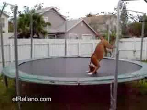 Perro saltarín! from YouTube · Duration:  7 seconds