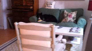 Therapy Dog Othello Training Short Term Memory - With Bloopers!