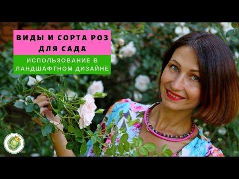 Виды и сорта роз для сада//Как использовать розы в ландшафтном дизайне