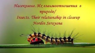 Насекомые. Их взаимоотношения  в природе/ Insects. Their relationship in closeup Nordin Serayana