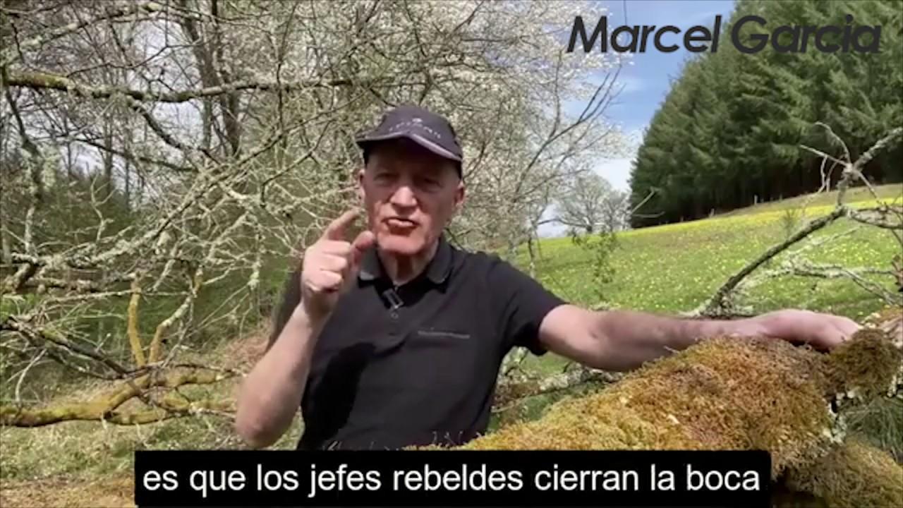 El pastor francés y las ovejas | Marcel García