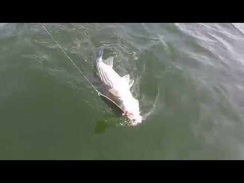 Lake Murray, SC Striper Fishing: Single Pole Fast Retrieving Ben Parker 8