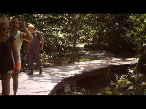 #8763,-personas-pasan-caminando-por-un-sendero-de-madera-2-[efecto],-paisajes-naturales