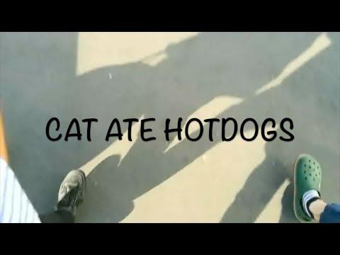 CAT ATE HOTDOGS - 君の好きな街へ PV