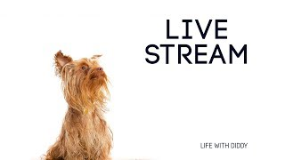 Life With Diddy: Live Stream 001