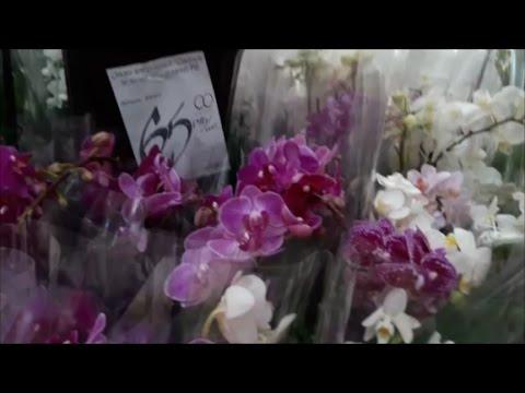 Орхидеи в магазине. Цены. Уценки.