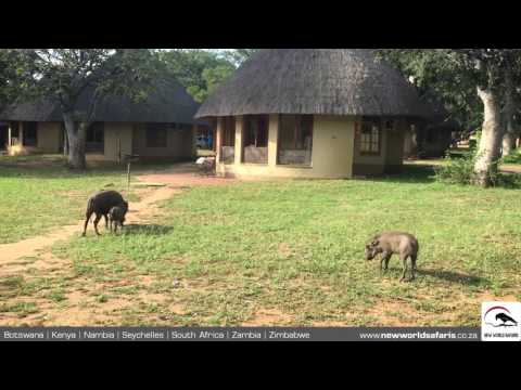 Kruger National Park - Warthogs