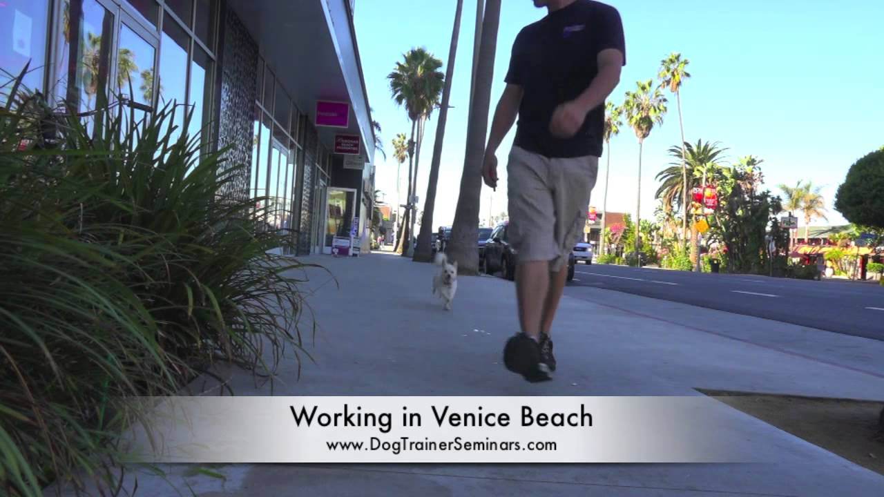 Private Dog Training Seminar, Venice Beach, WWE Announcer and Singer Lilian Garcia