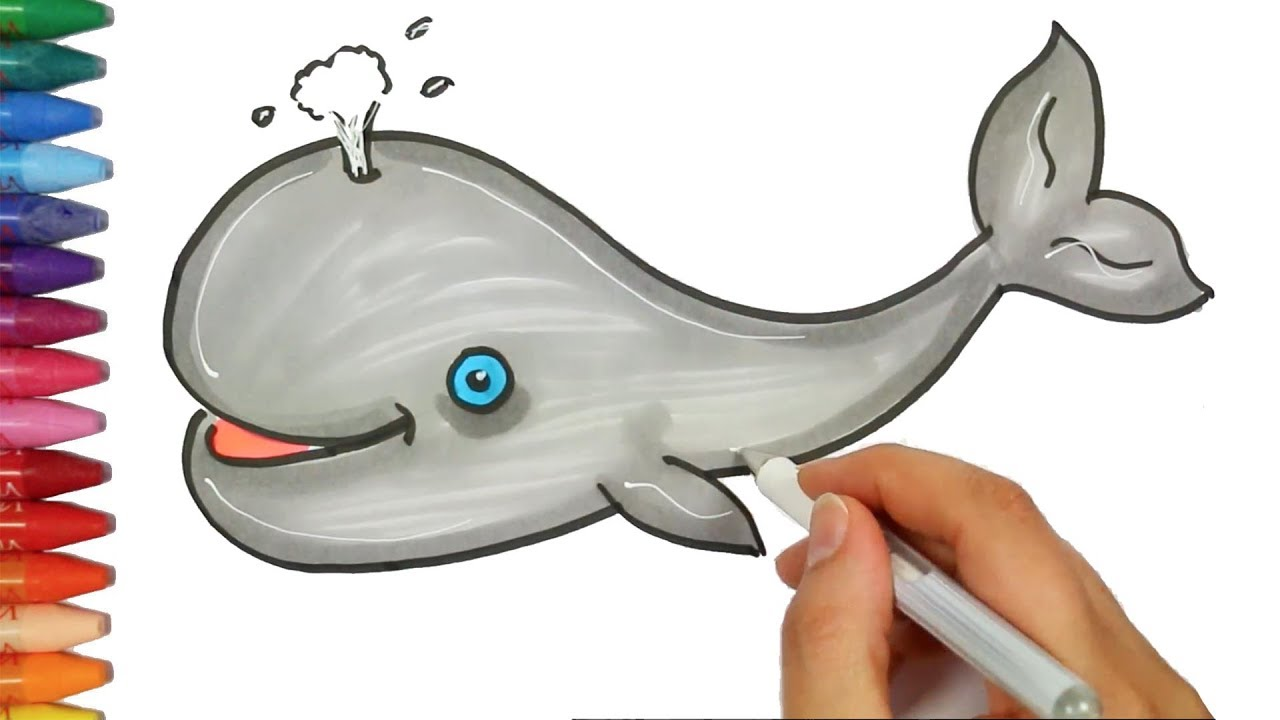 how to draw and color a whale how to draw and color kids tv