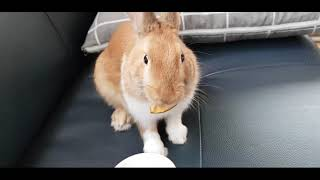 토끼 간신 만들기/ 토끼 간식 건조하기/토끼키우기/애완…