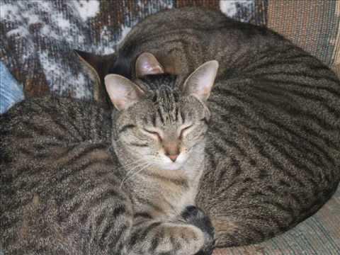 synthetic cat pheromone