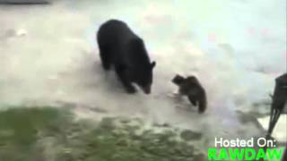 Cat Defends Mother And Son From Grizzly Bear - кошка защищает дом от медведя )