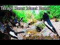 Terapi Kacer Macet Bunyi Denggan Gemericik Air Ngalir  Mp3 - Mp4 Download