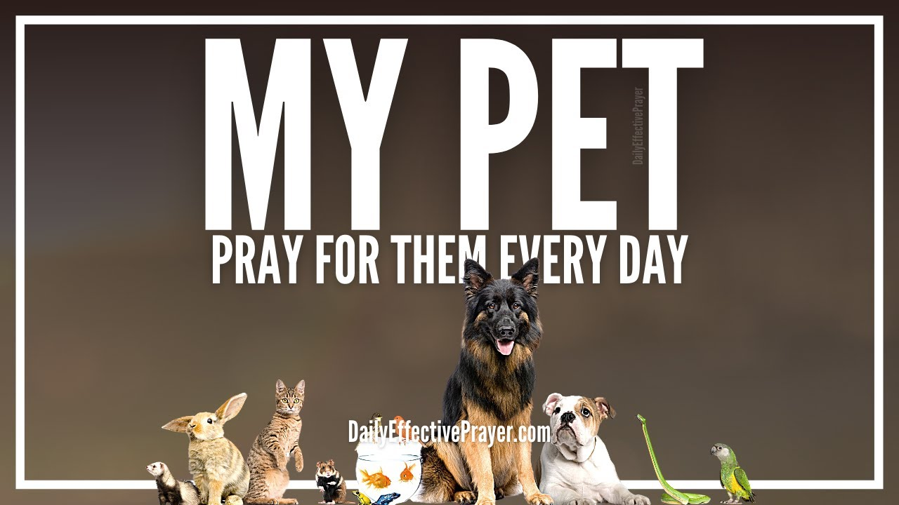 Prayer For Pets | Prayers For Animals (Dogs, Cats, Horses, Etc)