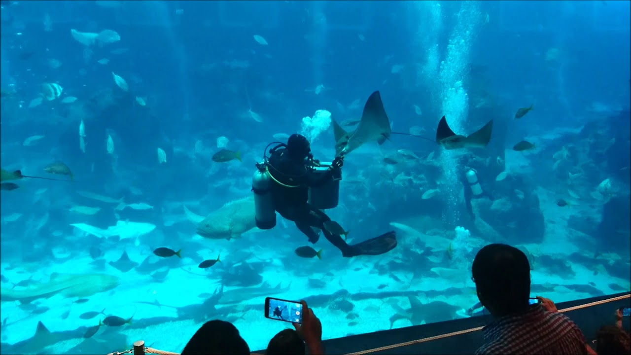 Sea Aquarium Singapore 2017 Tiket 3 S E A You