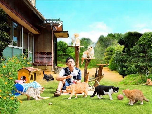 伊藤淳史×キュートな猫たち!映画『ねこあつめの家』予告編