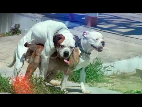 Dogs Mating Compilation HD 4K PICS