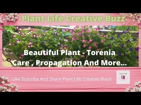 All About Torenia