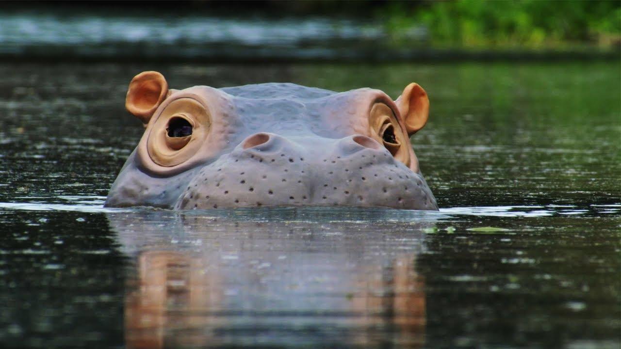 Hippo Beauty Regime