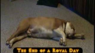 The English Bulldog King