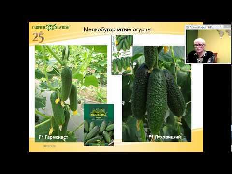 """Обзор огурцов. Сорта и гибриды огурцов компании """"Гавриш""""."""