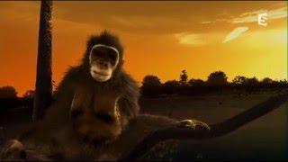 Le chimpanzé est un homme comme les autres
