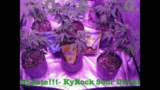 My Organic Garden- Ep:2 KyRock Farms Sour Diesel Clones