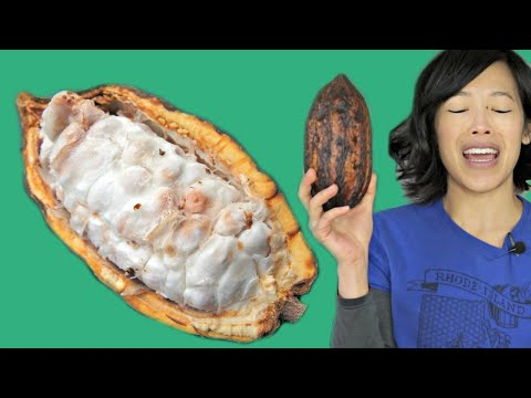 COCOA POD - How to Open & Eat a Cacao Pod - Fruity Fruits