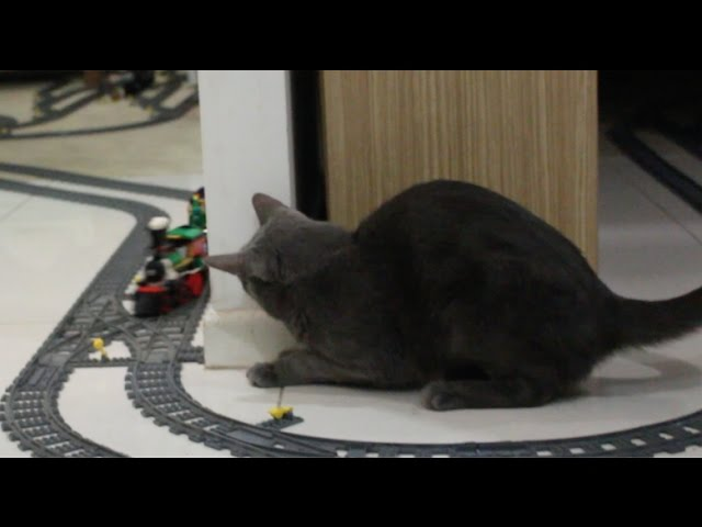 Cat Reacts to Lego Train!!  50,000Sub Special