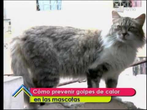 Cómo prevenir golpes de calor en las mascotas