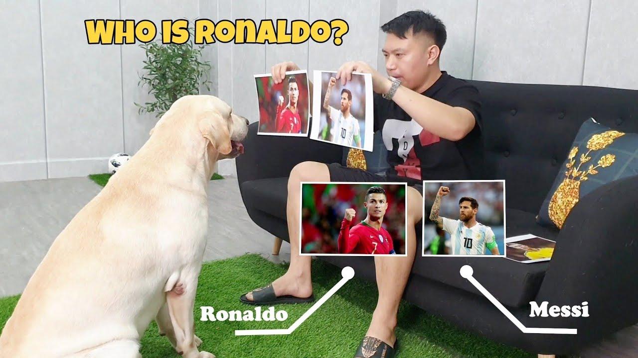 Kinh ngạc trước khả năng nhận diện các siêu sao bóng đá của chú chó Củ Cải