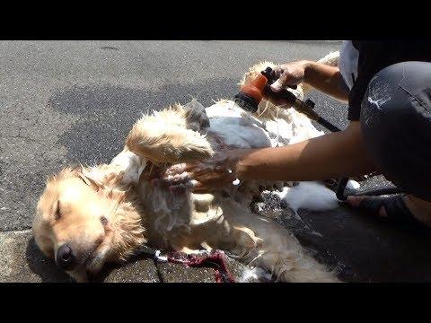 まったく参考にならない犬の洗い方講座 How to wash my dog