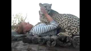 Cuddling with the cheetah named Pride