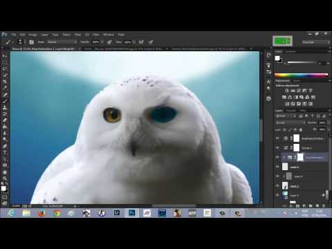 Speed art - Eagle Owl (#Photoshop CC)